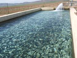 دانلود پاورپوینت اصول مدیریت پرورشی و بهداشتی ماهیان گرم آبی