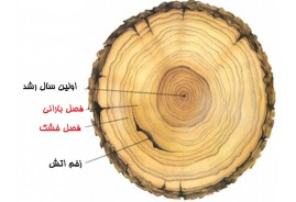 دانلود تحقیق انواع روش های تعیین سن درختان